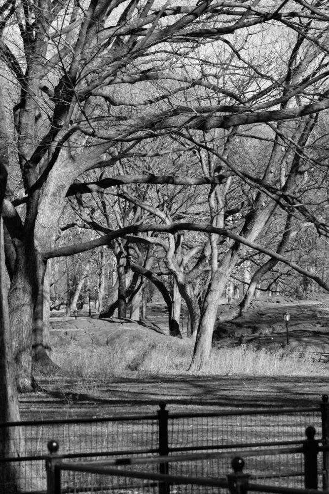 Central Park Image 1745 Grey, Jace 86777