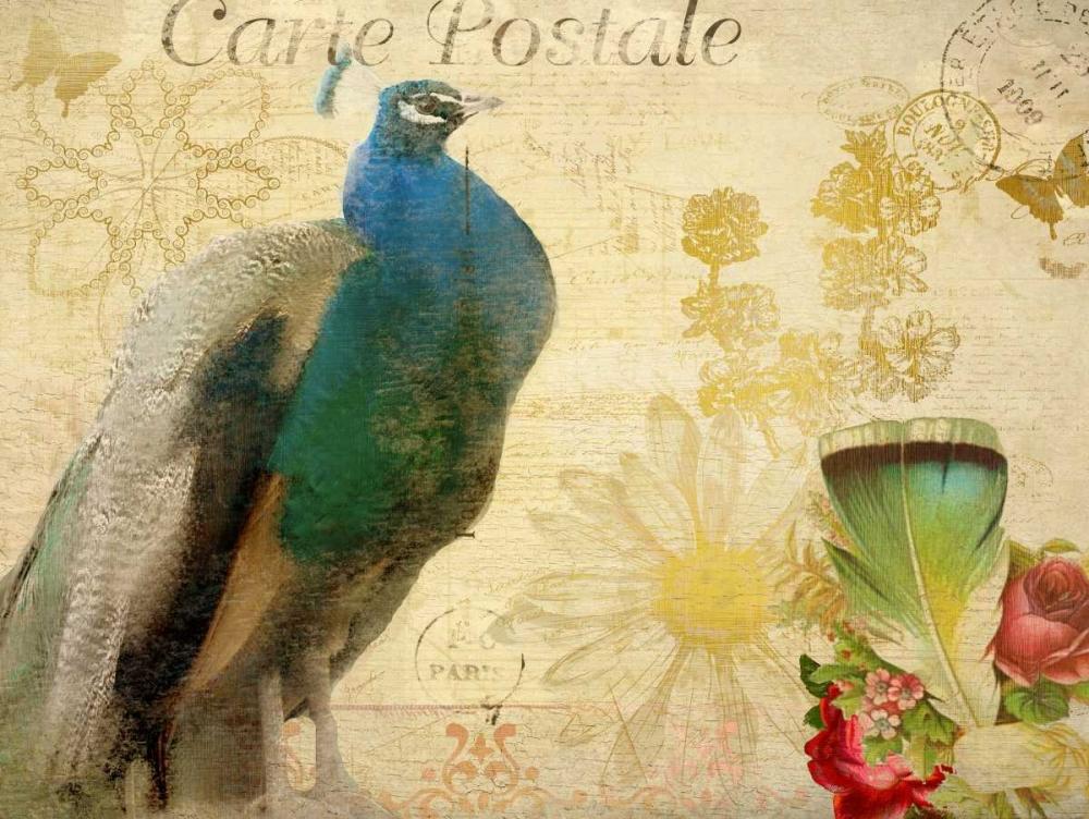 Postcard Peacock Allen, Kimberly 125804