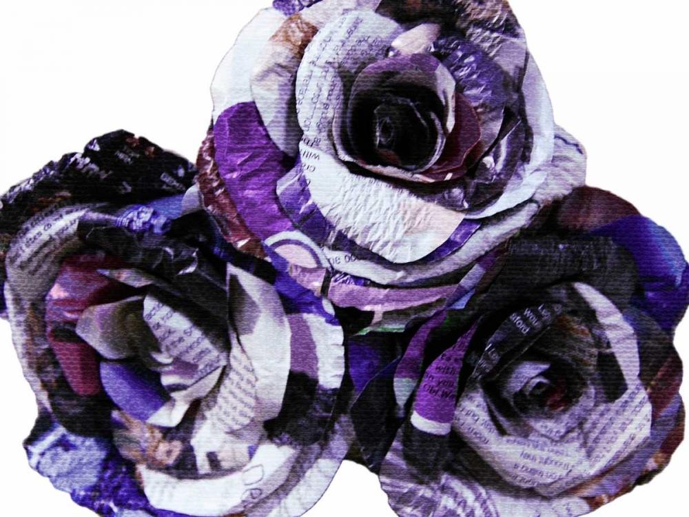 Paper Roses Prime, Marcus 106767