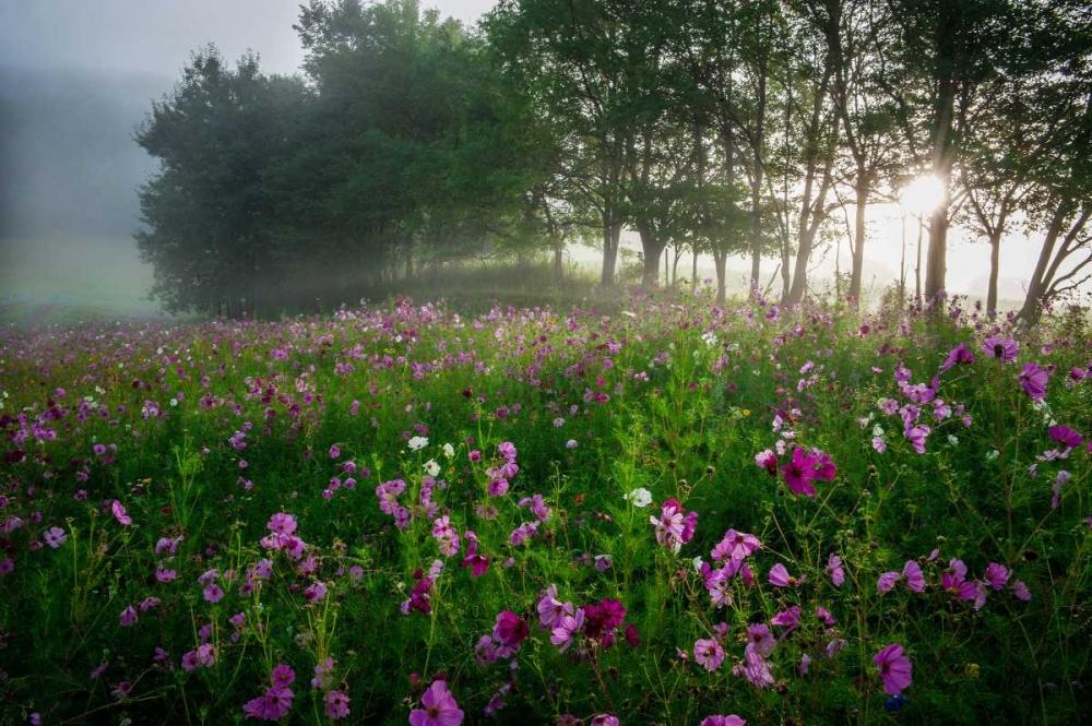 Flower Field Rowland, Joseph 139209
