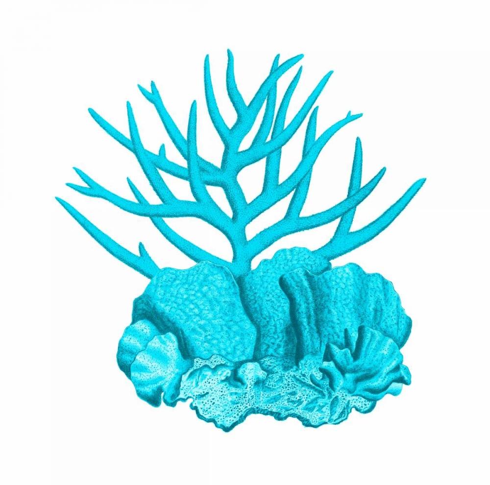 Blue Coral 1 Lewis, Sheldon 106975