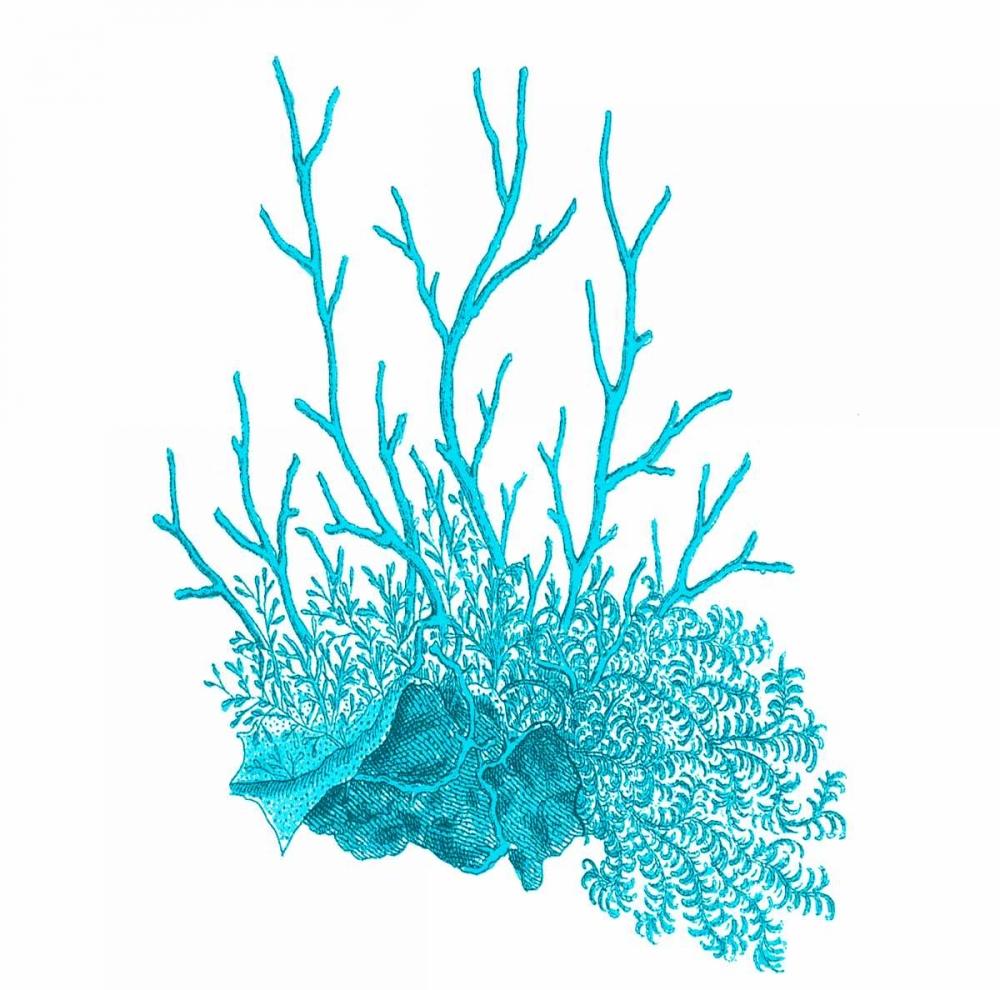 Blue Coral 2 Lewis, Sheldon 106976
