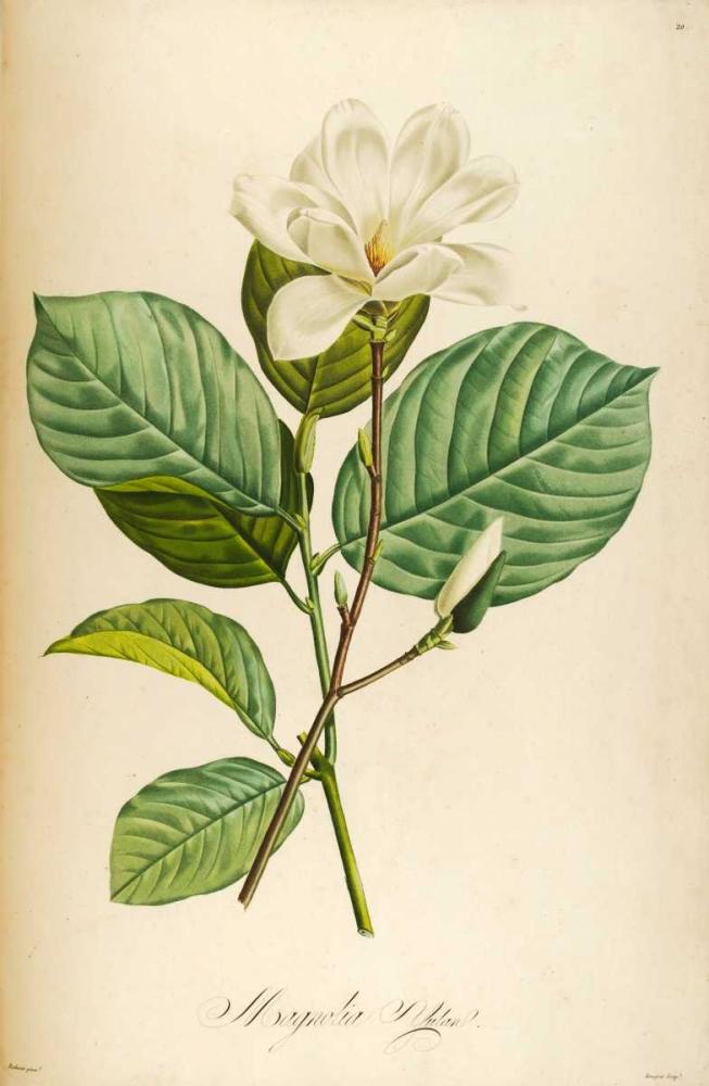 Vintage Botanical Carlson, Tina 162553