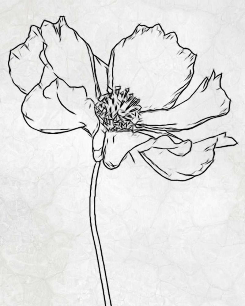 FLOWER 2 Greene, Taylor 39909