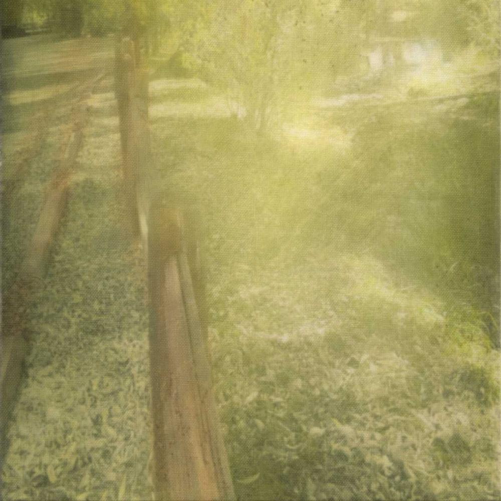 Sunlight Silhouette Greene, Taylor 162583