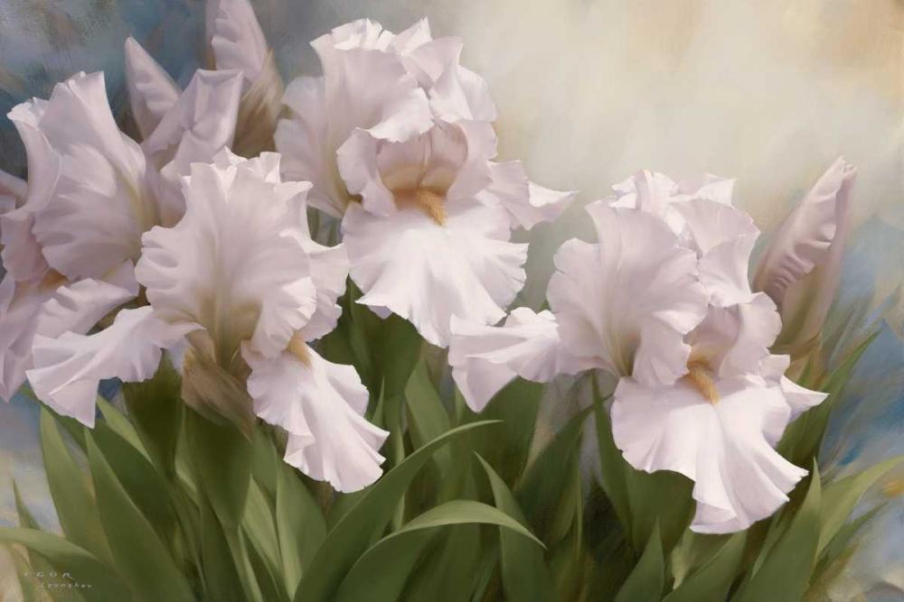 White Iris Elegance I Levashov, Igor 10105