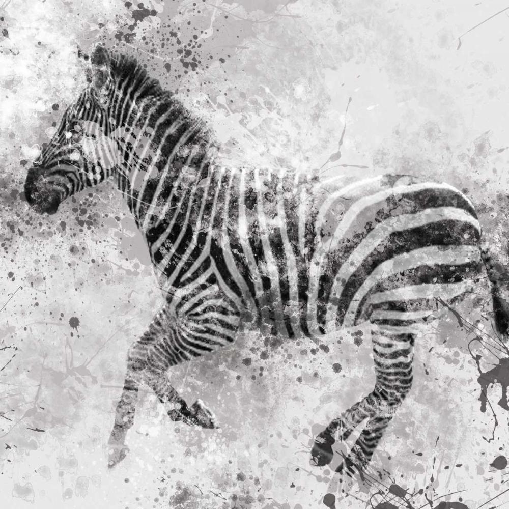Zebra II Robinson, Carol 55425