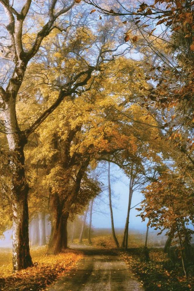 The Road to You Van de Goor, Lars 124444