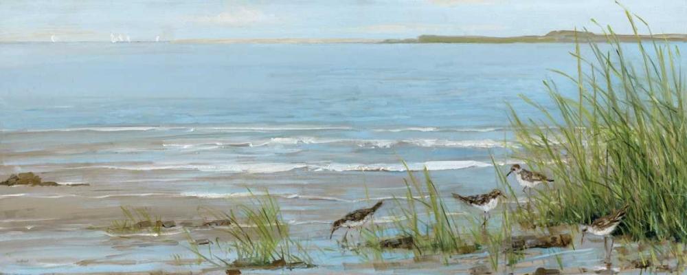 Sandpiper Beach Swatland, Sally 151132