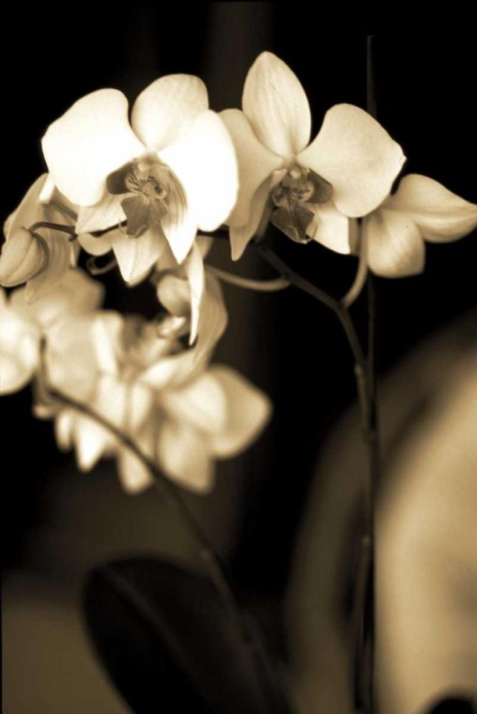 Exotic Blooms Ryan, Cinzia 12561