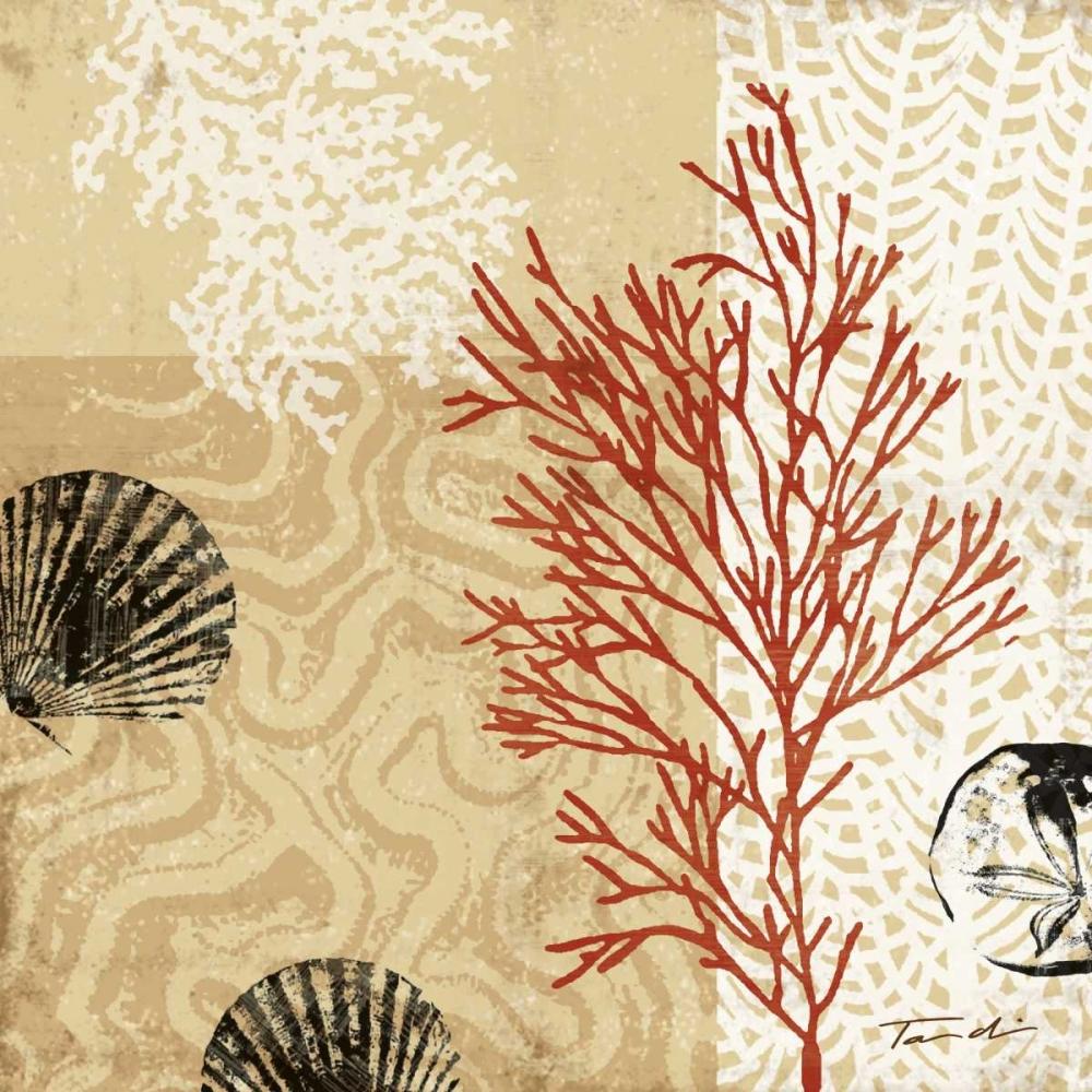 Coral Impressions II Venter, Tandi 12057