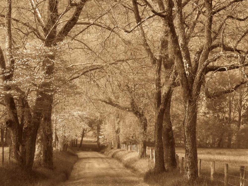 Smokies Road Caro, Wendy 12842