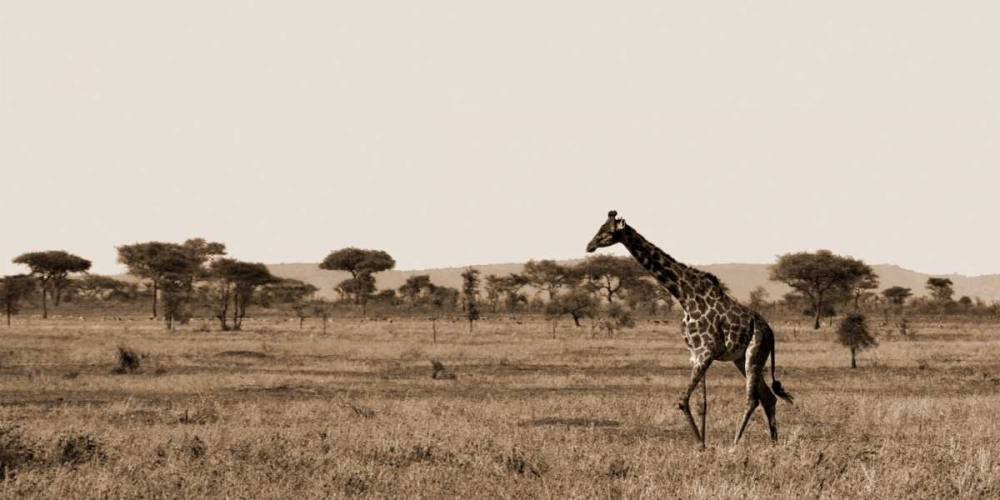 Serengeti Horizons II Maihara/Watt, Jeff/Boyce 12851