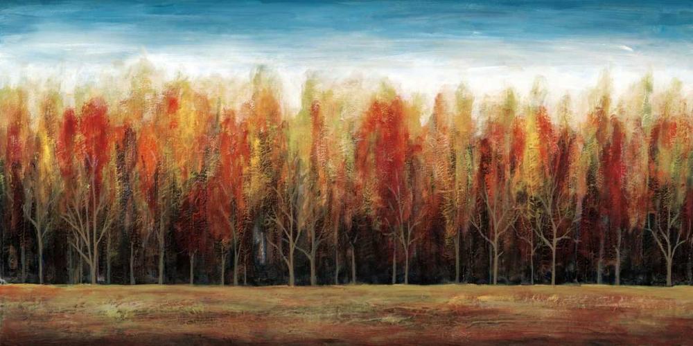 Deep Forest Fontaine, Stephane 36318
