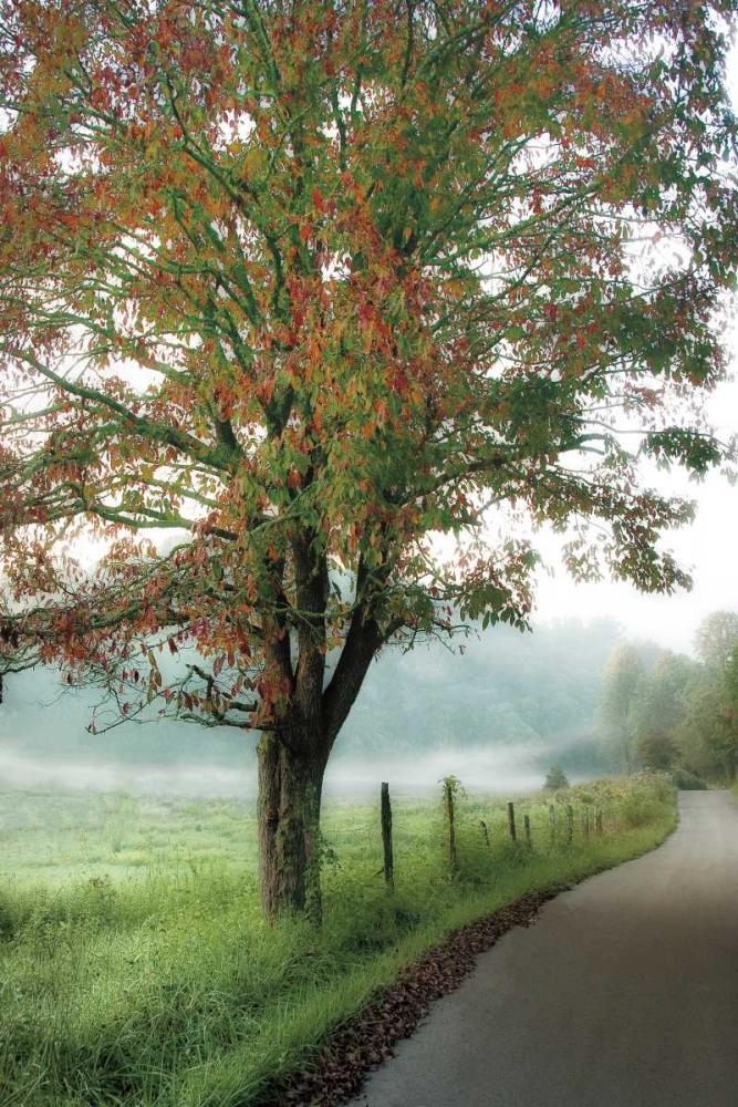 Almost Autumn Burt, D. 36327