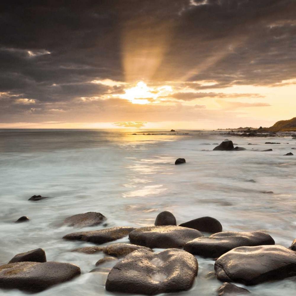 Nordic Sunset Frank, Assaf 36467