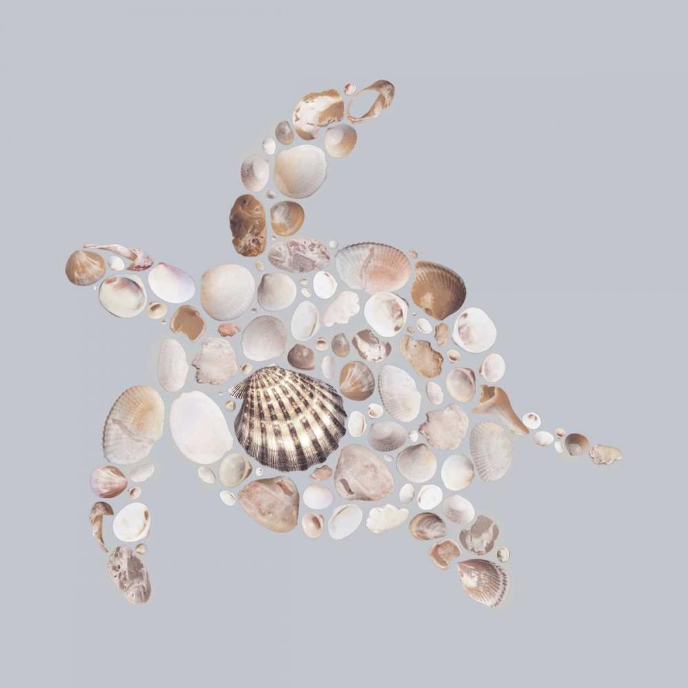 Sea Turtle Lloyd, Justin 119054