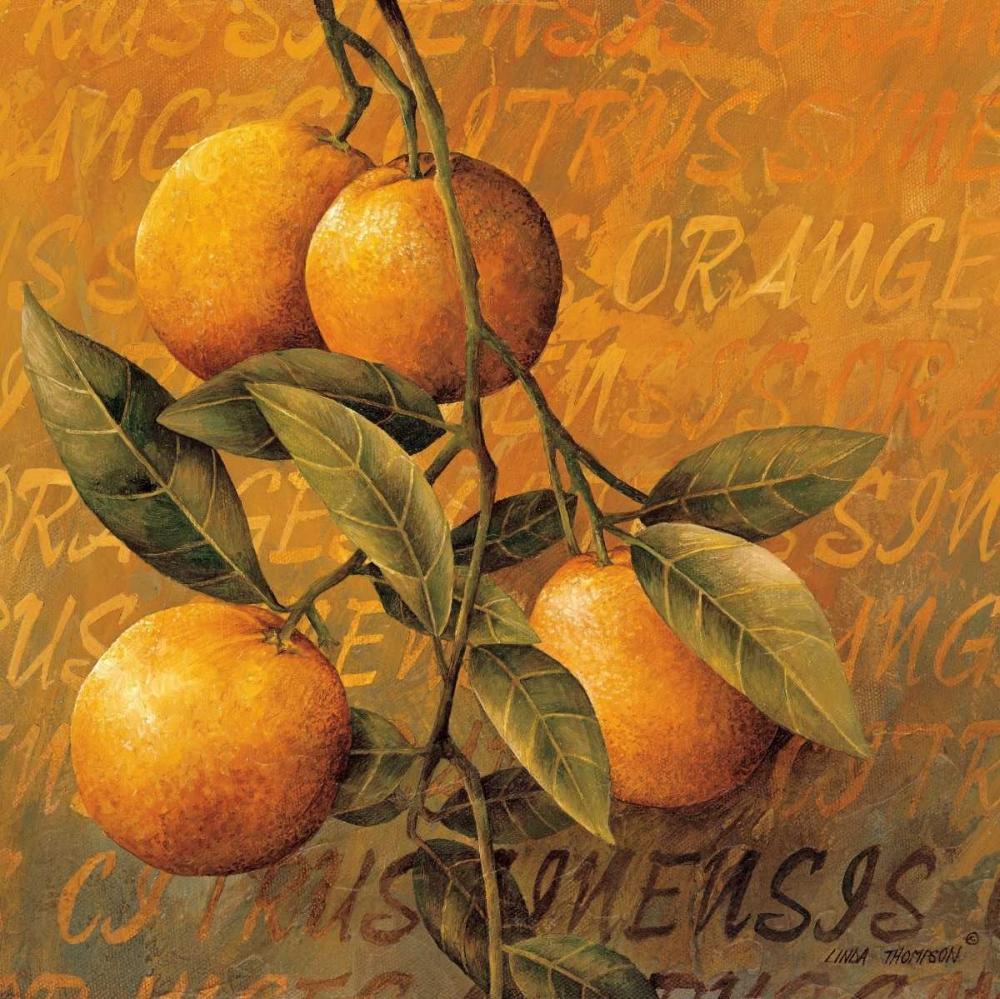 Orange Branch Thompson, Linda 12469