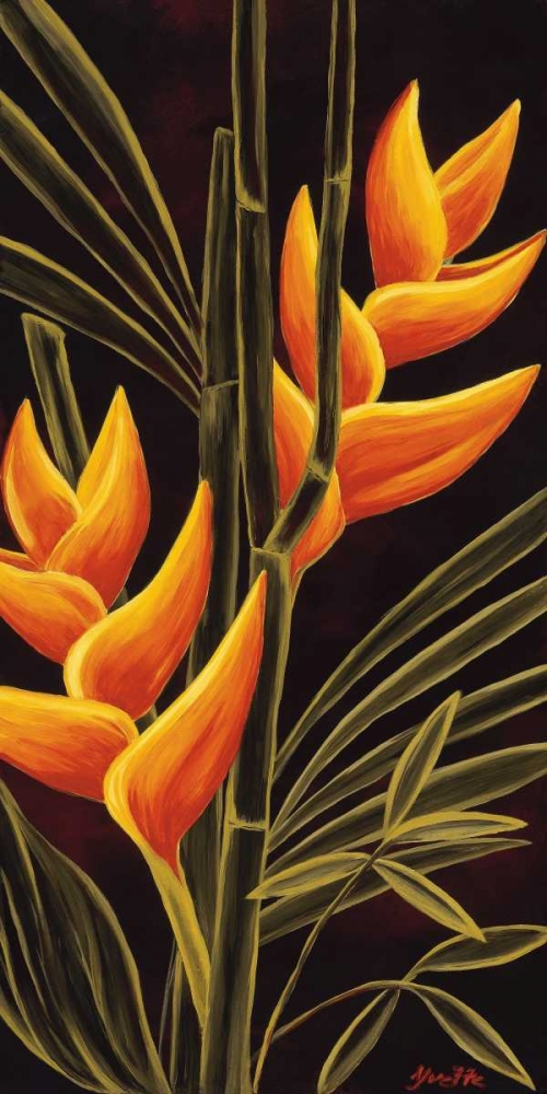 Heliconia St. Amant, Yvette 12978