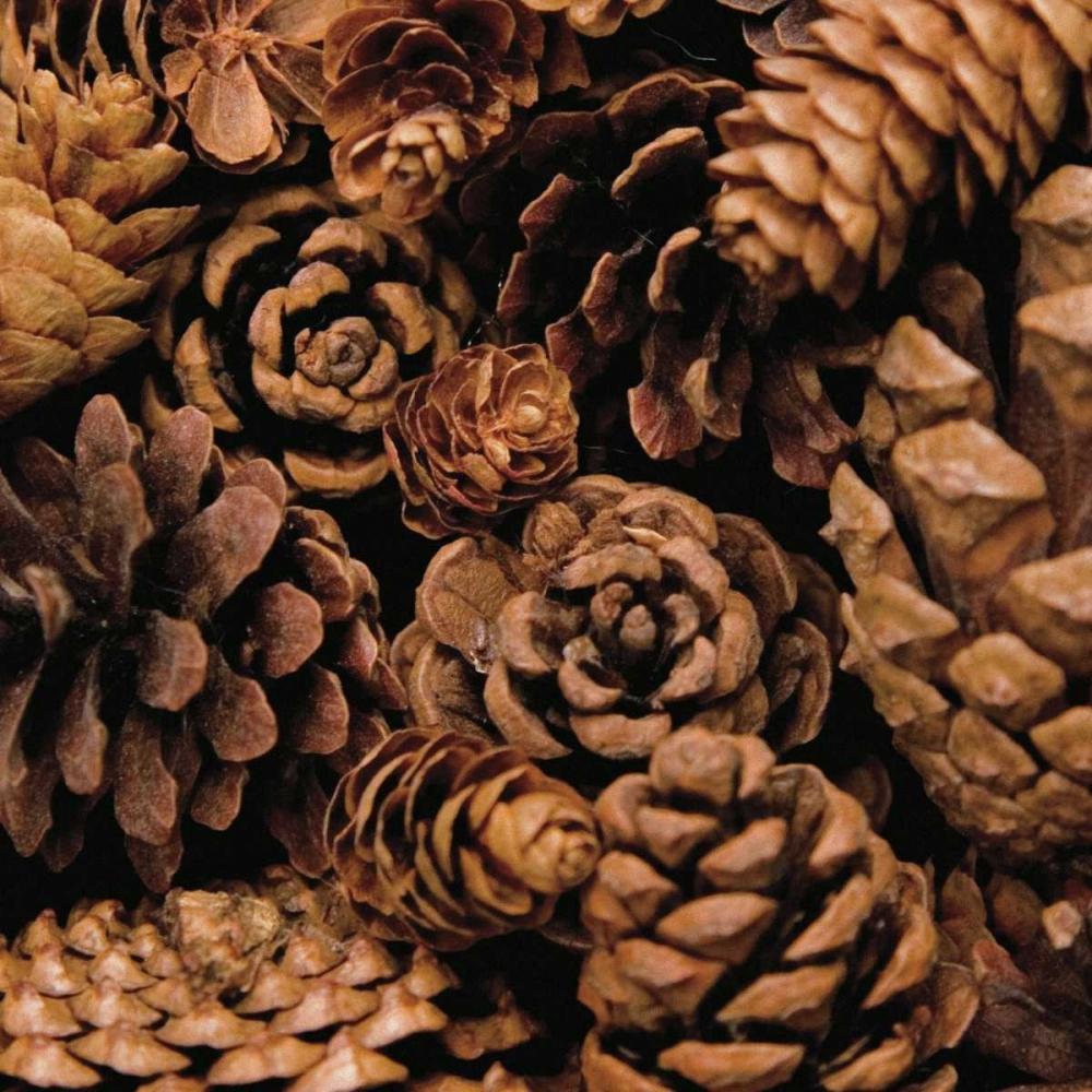 Cone Harvest Maihara/Watt, Jeff/Boyce 11643