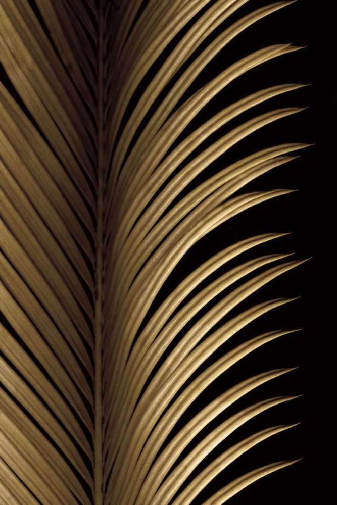 Tropical Leaf Study I Levine, Andrew 12373