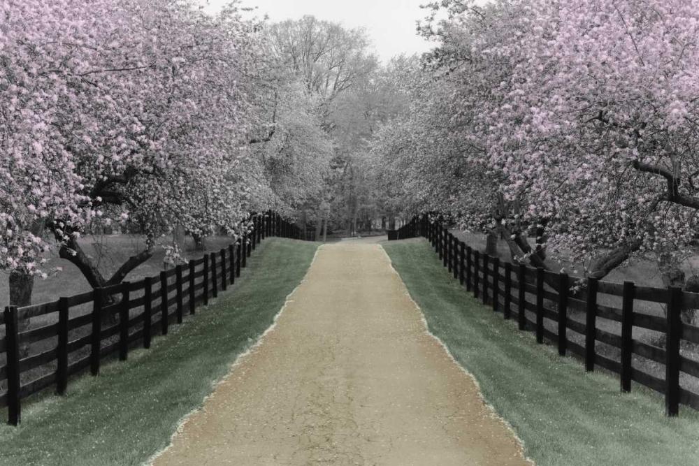Apple Blossom Lane Nagler, Monte 36831