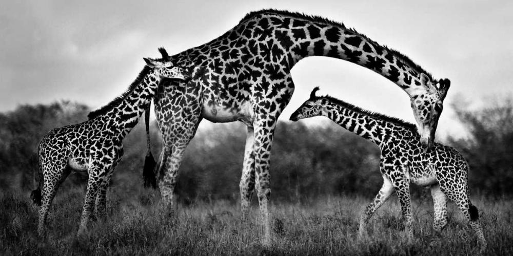 Giraffe Family Ortega, Xavier 36840