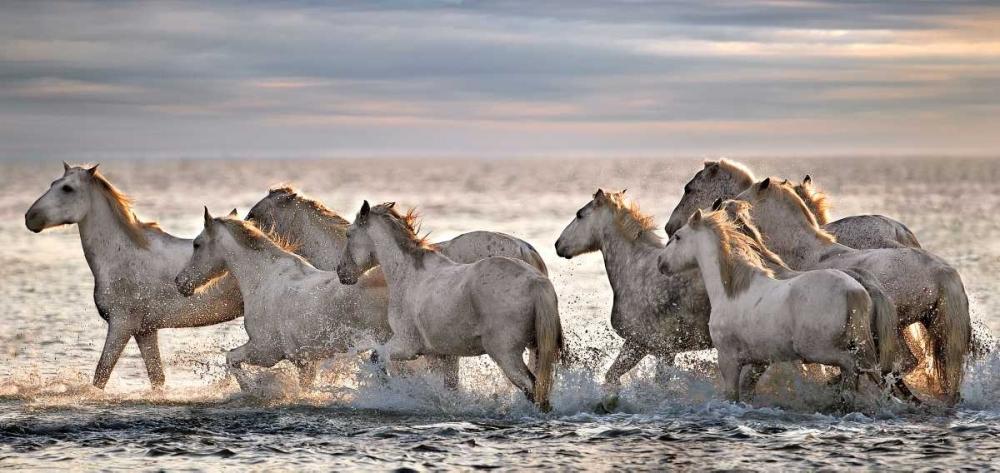 Running Horses Ortega, Xavier 36841
