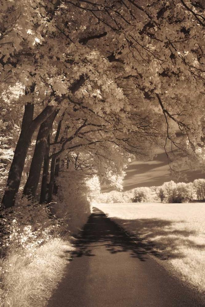 The Path Ahead Szilagyi, Ily 36955