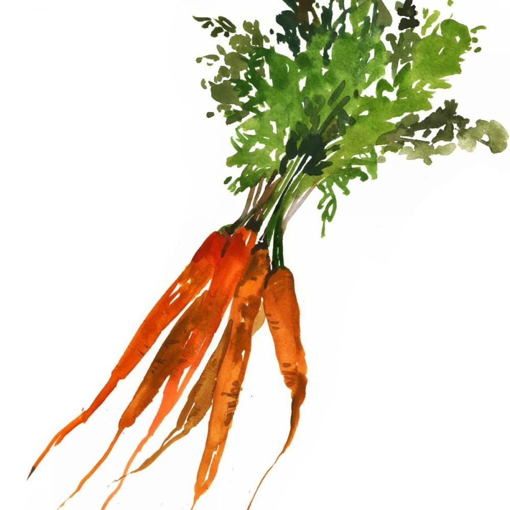 Carrot Jensen, Asia 107589