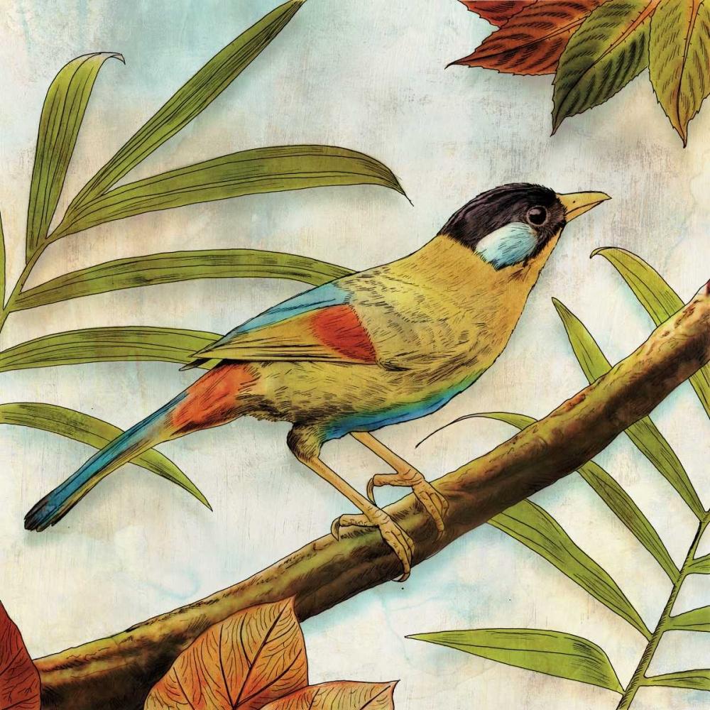 Jungle Bird I Selkirk, Edward 80492