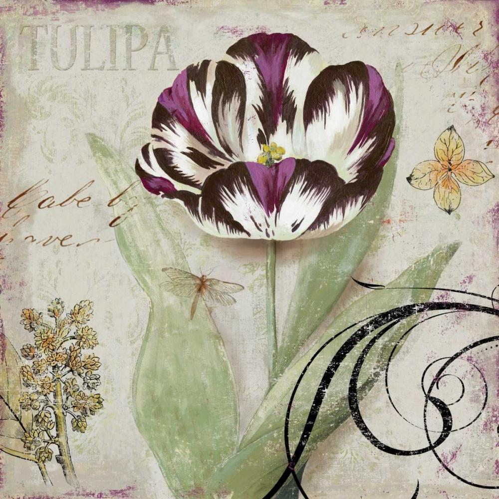 Tulipa II Wilson, Aimee 11008