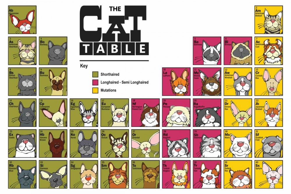 The Cat Table Angry Squirrel Studio 32651