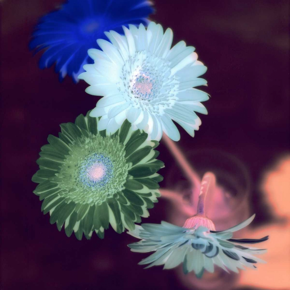 Floral Color - 5 Blaustein, Alan 81819