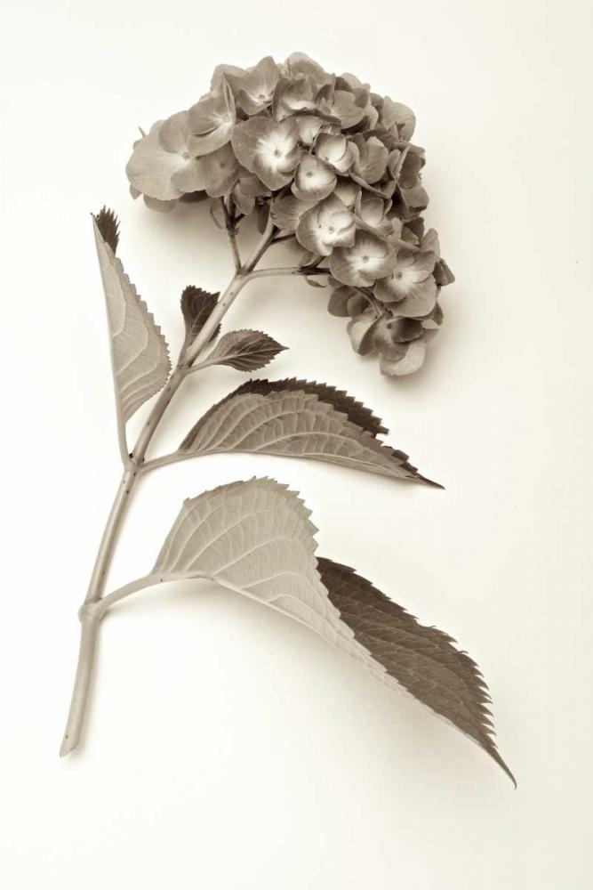 Garden Bloom - 1 Blaustein, Alan 81926