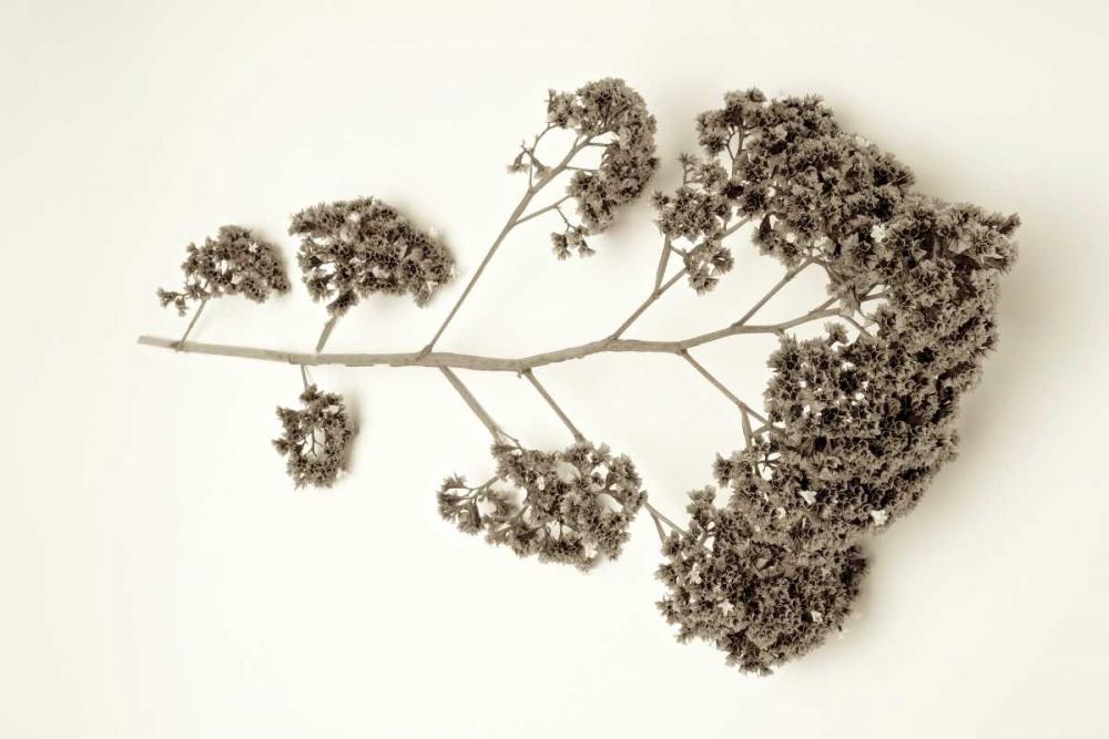 Garden Bloom - 21 Blaustein, Alan 81939