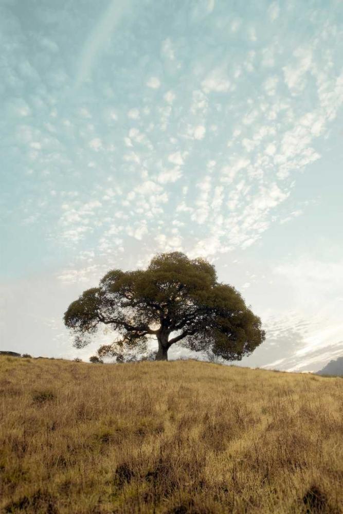 Oak Tree - 12 Blaustein, Alan 82260