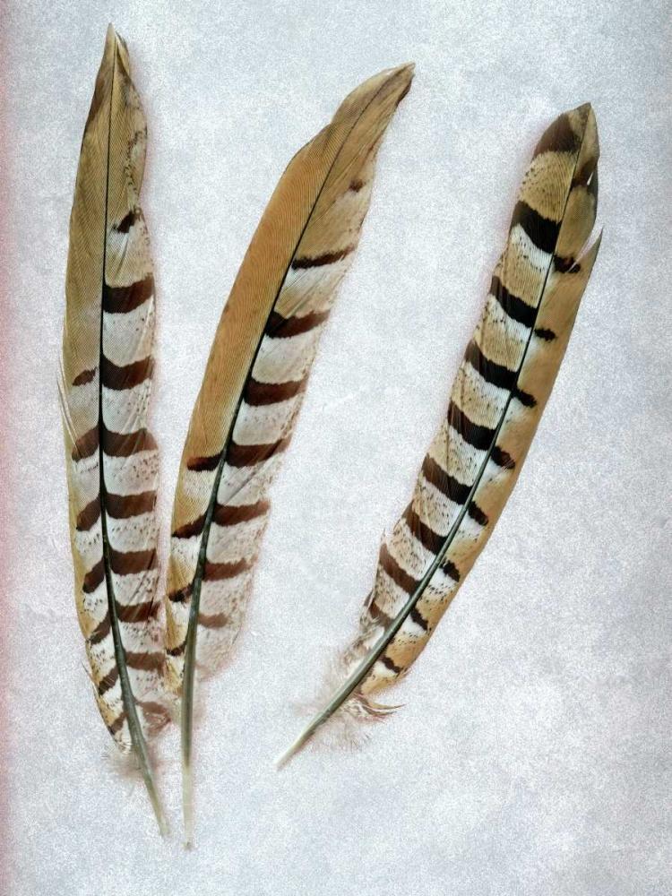 Feather - 1 Blaustein, Alan 81739