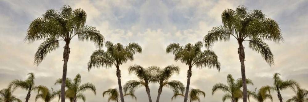 Palm Banner - 1 - Color Blaustein, Alan 82359