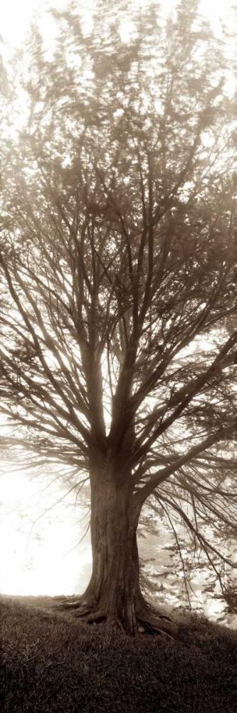 Hampton Gates Tree No.1 Blaustein, Alan 82039