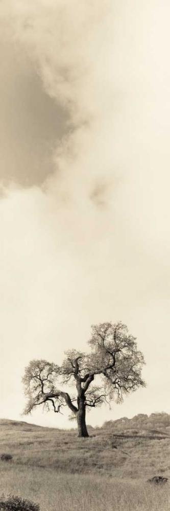 Vintage Oak Tree Blaustein, Alan 14786