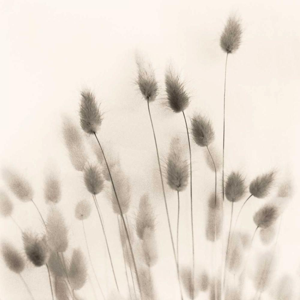 Italian Tall Grass No. 2 Blaustein, Alan 14688