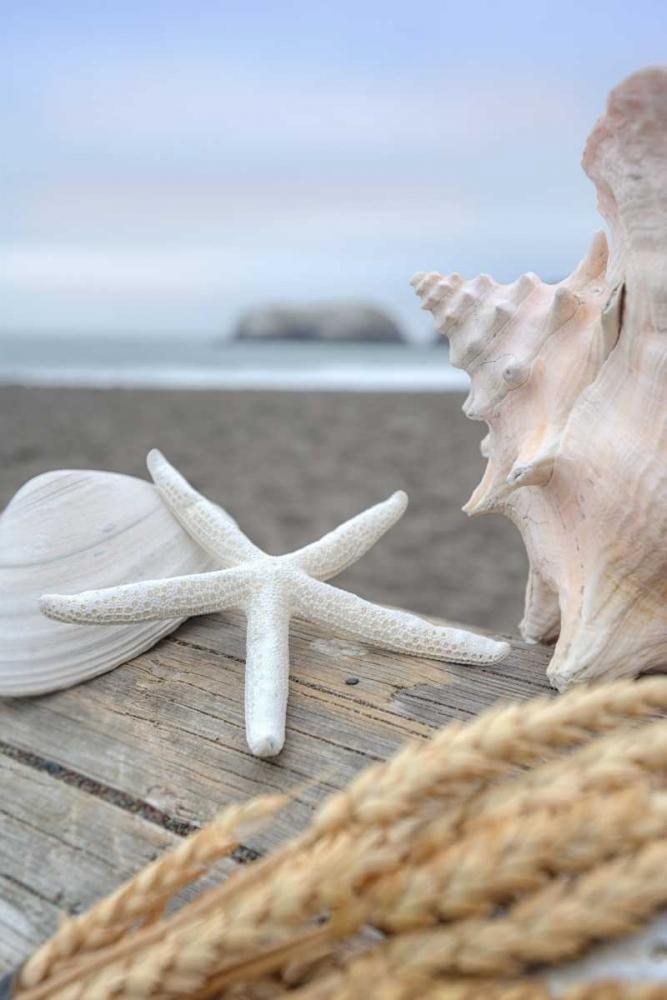 Crescent Beach Shells 12 Blaustein, Alan 139787