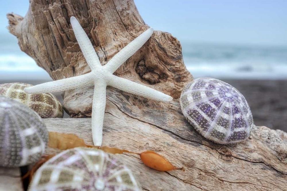 Crescent Beach Shells 7 Blaustein, Alan 139797