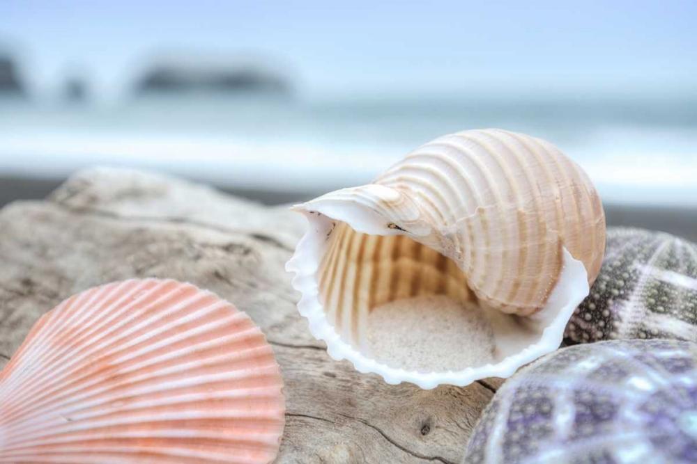 Crescent Beach Shells 9 Blaustein, Alan 139799