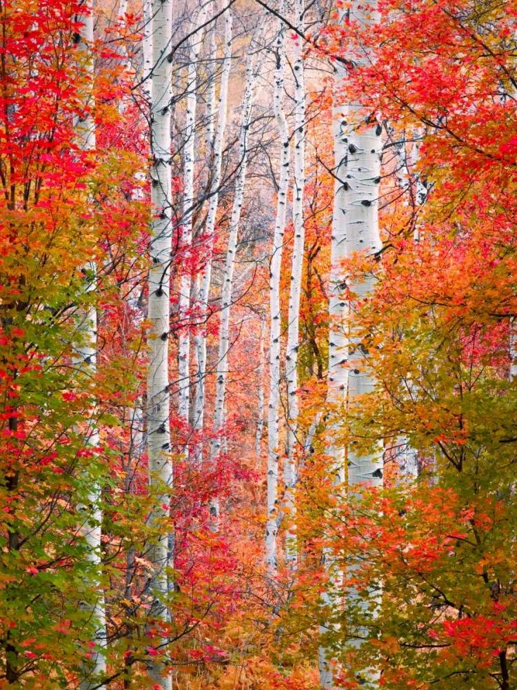 Autumn Passage Carmel, Elizabeth 65486