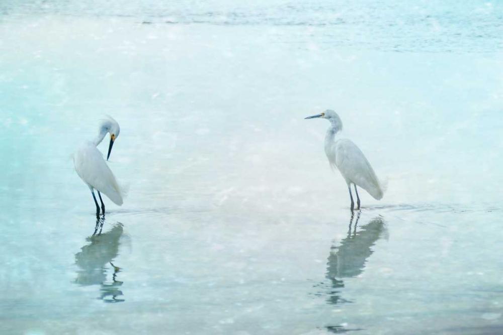 White Cranes Cmarits, Hannes 149691
