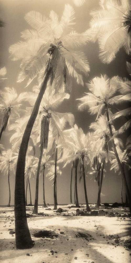 Palm Shadows I Friedman, Susan 14859