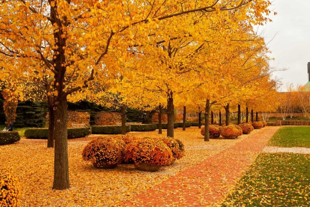 Fall Walkway Ganju, Abhi 66163