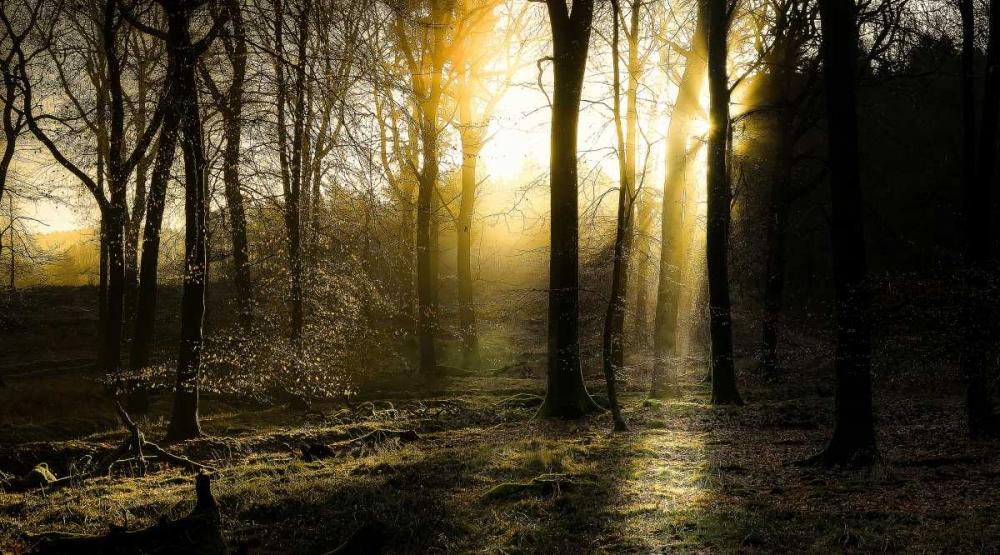 Autumn Lights Goncalves, Adelino 88288